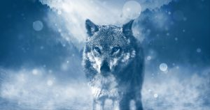 Wolves and the Female Alpha